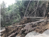 Tree debris covering Panther Gap Road