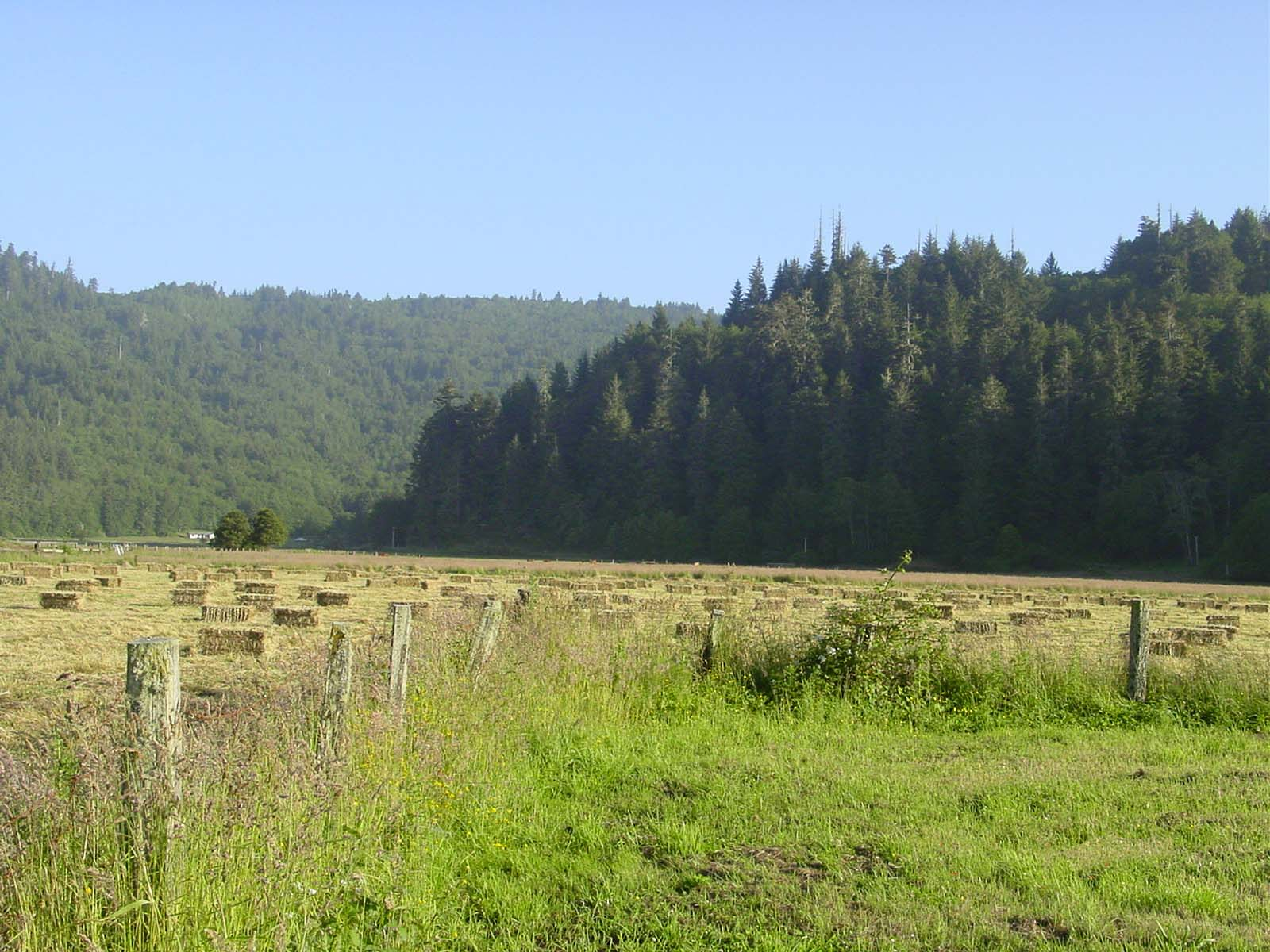 Photo of a fenced field containing bailed hay with two wooded ridges in the background