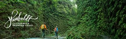 Two People Hiking in Fern Canyon Located in Humboldt County