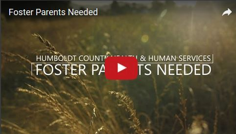 Foster Parents Needed text overlay on field of tall grass.