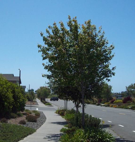 Picture of an urban road emphasizing the sidewalk and landscape strip