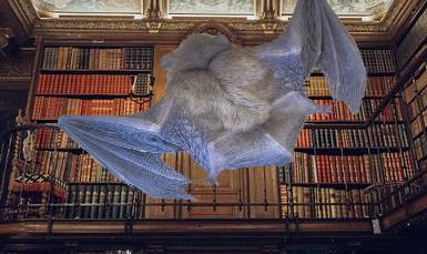 The photo of a bat added to library shelves photo to illustrate the library bat concept.