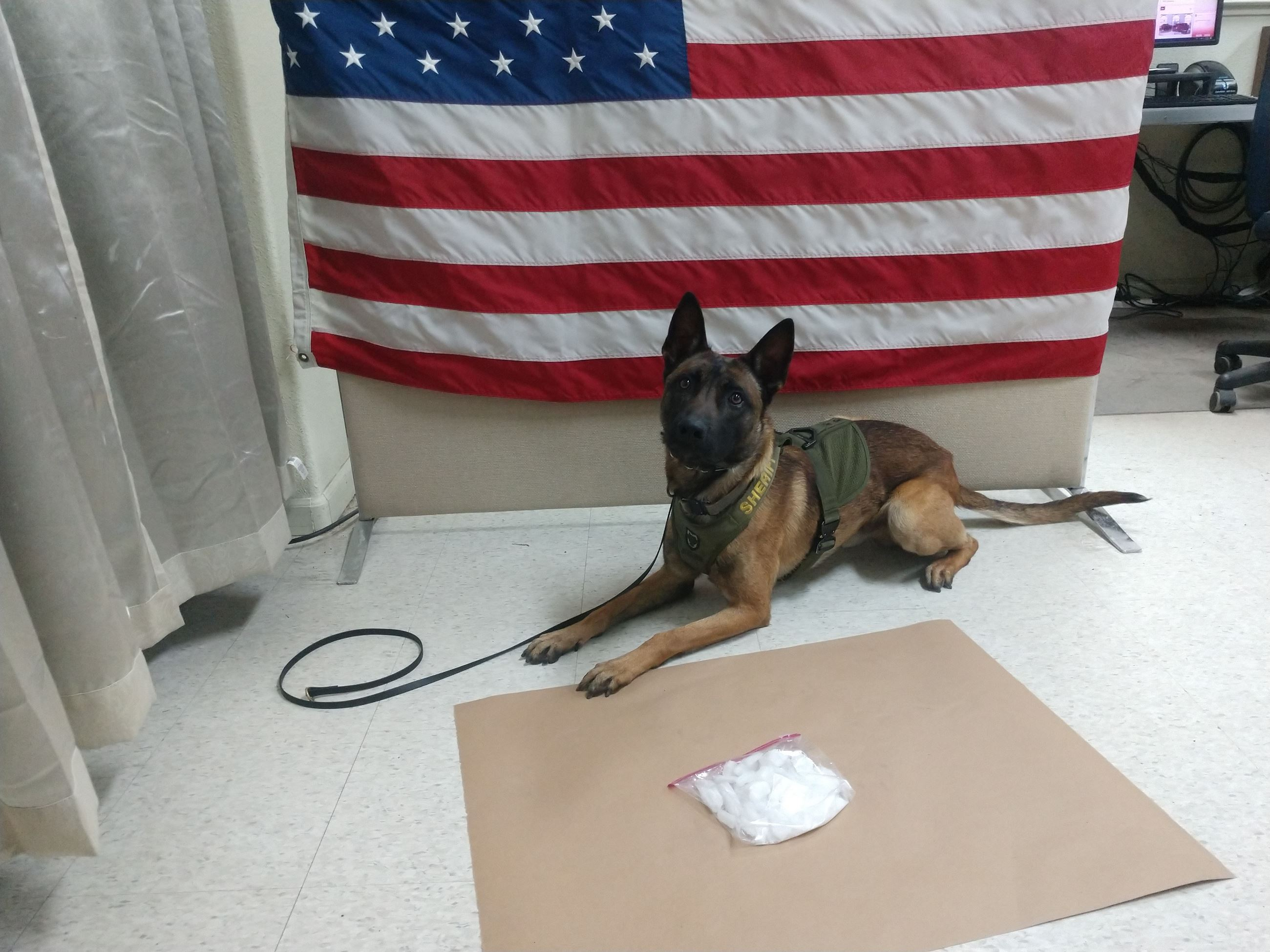 K9 Yahtzee with methamphetamine