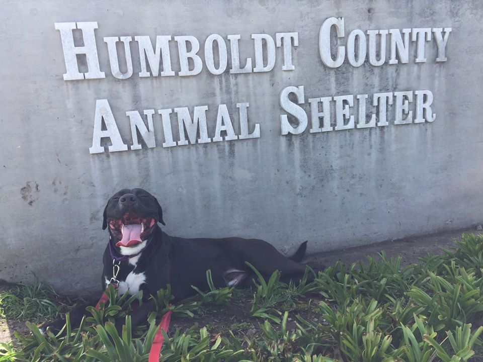 Black dog in front of the Humboldt County Animal Shelter sign