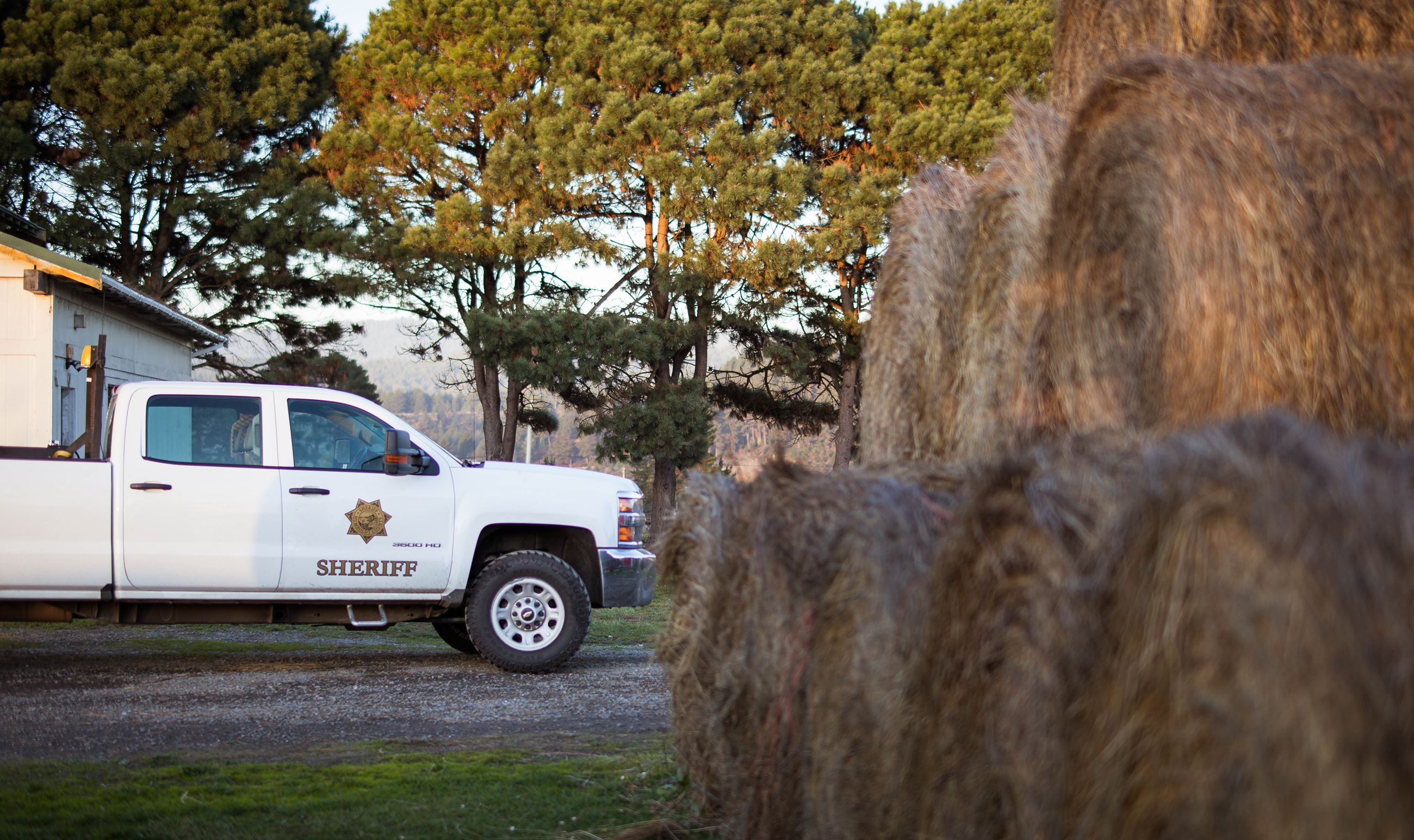 Sheriff truck with hay