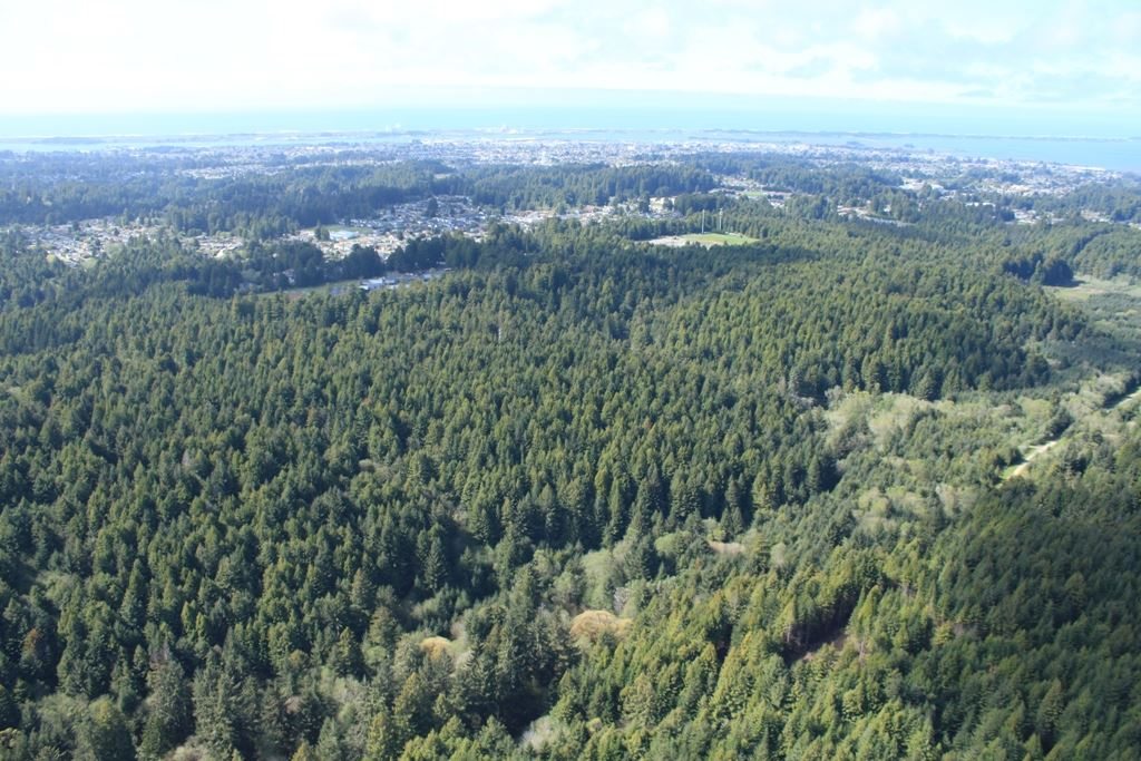 McKay Community Forest aerial photo