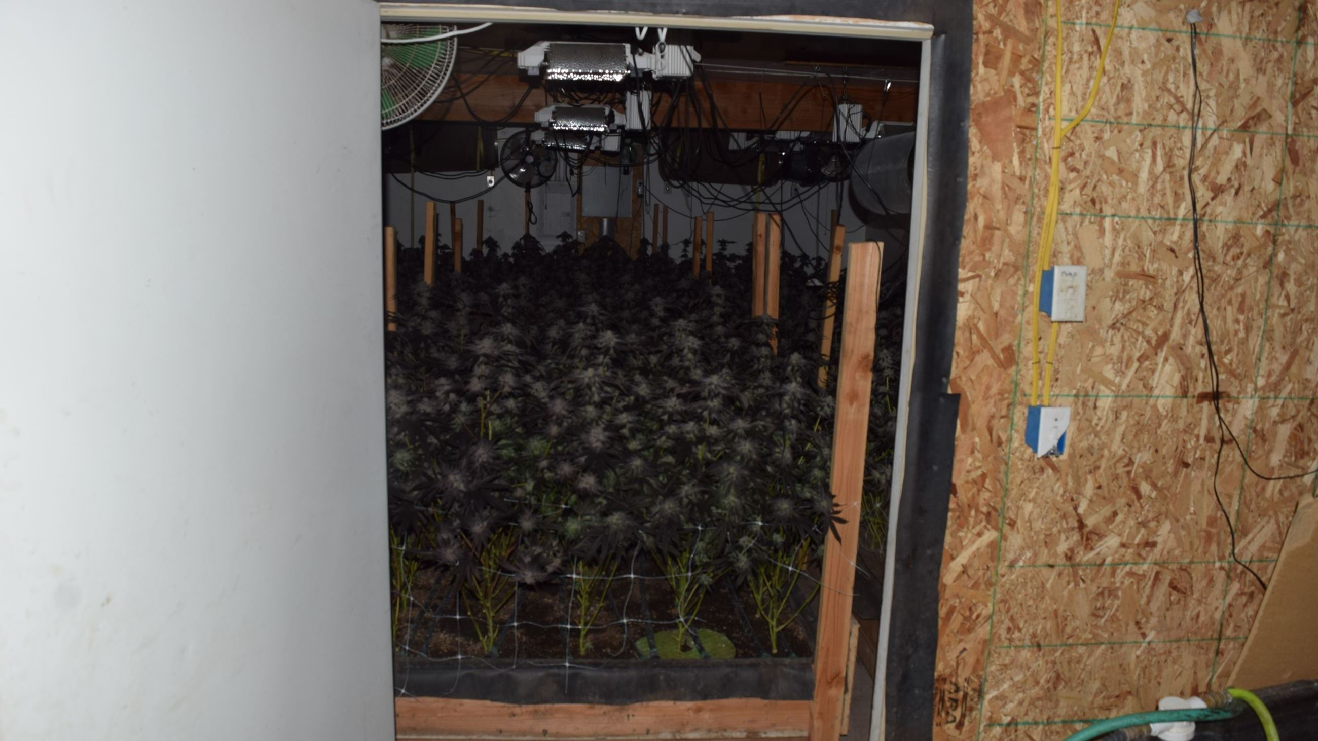 Growing marijuana inside a storage unit
