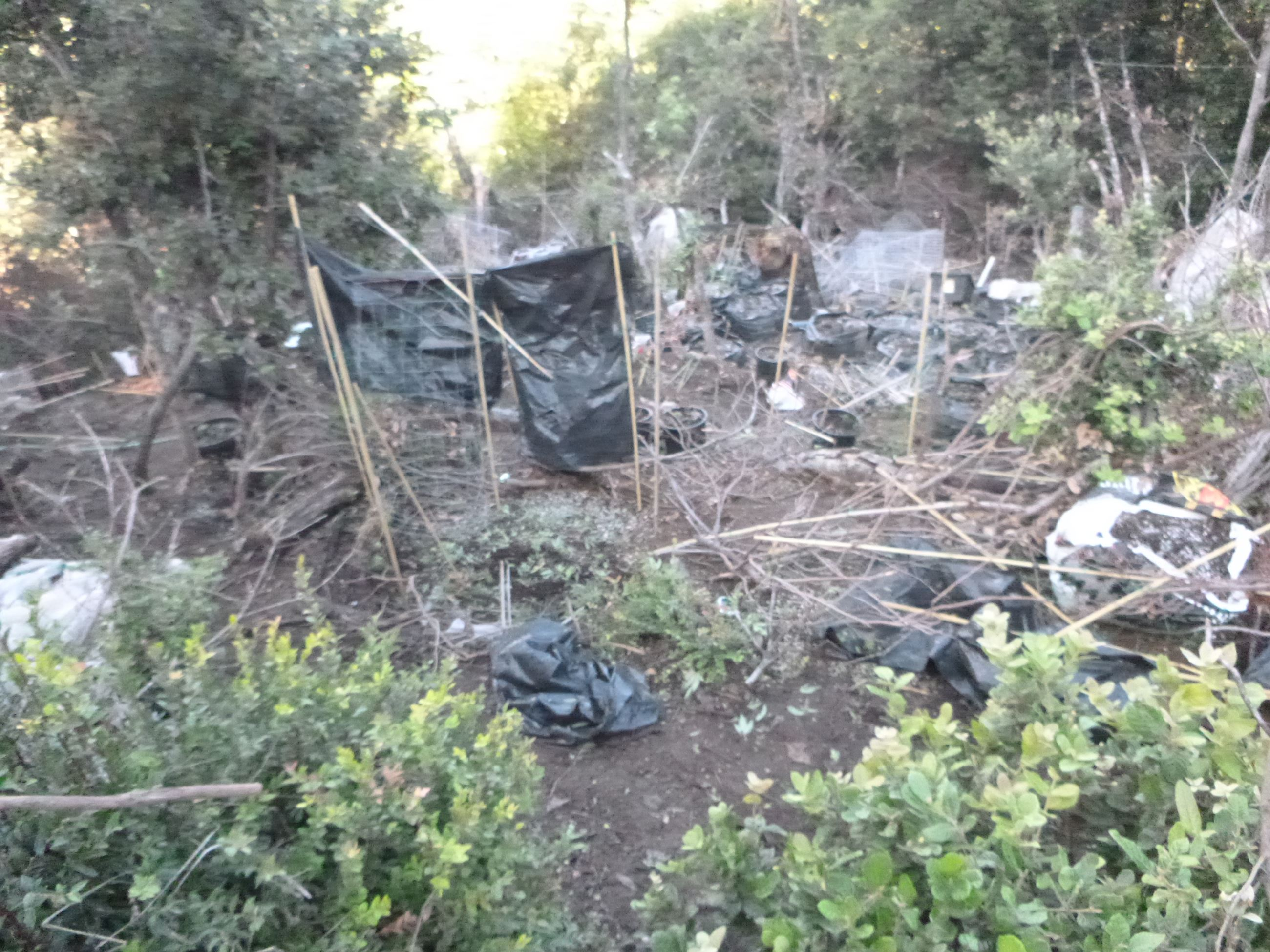 Marijuana Eradication - Case 201605245
